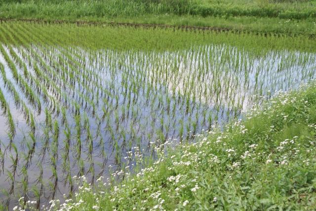 米作りで利益を得るには