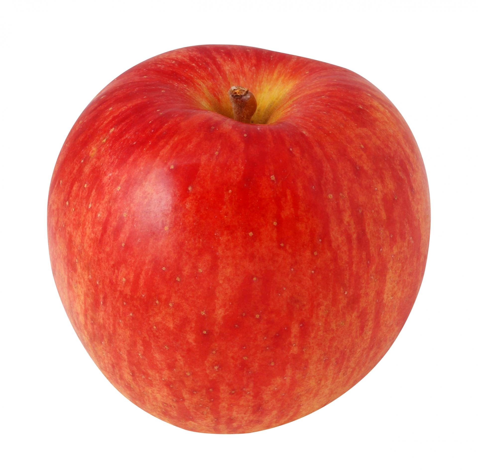 本日、幻のリンゴ売ります。